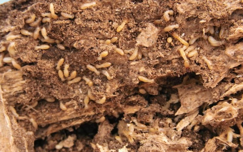 ホウ酸の木材防蟻・防腐処理(シロアリ処理)工事
